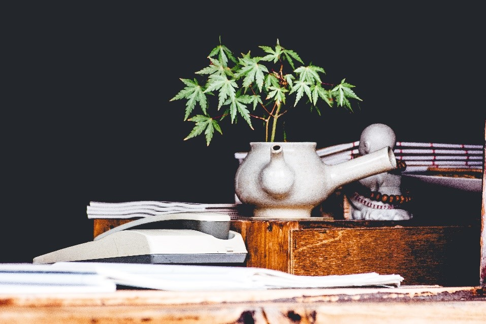 Marijuana and NRS 613.333